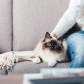 一人暮らしでも猫は飼える!初期費用や飼育の方法、注意点など