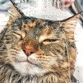 【2018年版】猫のシャンプーおすすめランキング!人気商品ベスト5♪
