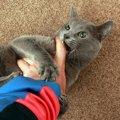 猫が飼い主に攻撃してきた時にしてはいけないNG行為5選