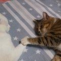 お手てを繋いでスヤスヤ…仲良しな猫ちゃん達