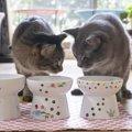 猫の意外な『大好物』ランキングTOP5!実はネズミより好きなものとは?