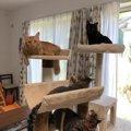 姉妹猫と姉弟猫、4匹に癒される日々