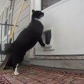 これは良いアイディア!猫がチャイムを鳴らせるキャットドア