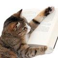 猫の血統書のホントの意味!その種類と内容とは