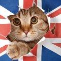 猫の飼い主が思う『世界に猫が必要なワケ』ランキングTOP3!