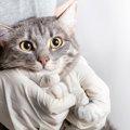 【新型コロナ】無症状の猫でも他の猫に感染