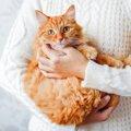 猫を抱っこ好きにするには?ポイントや嫌がる時の対策など♪