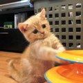 子猫の噛むおもちゃでおすすめの人気商品10選!与える時期やしつけ方…
