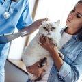 猫エイズの治療方法や費用について