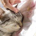 猫の肺水腫とは  その症状や原因、治療の方法