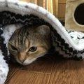 寒い冬のお留守番でも安心できる「猫のための快適環境作り」のポイン…