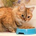 猫の食欲がない時、原因と対策・考えられる病気とは