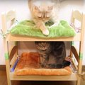 猫ちゃん専用ベッドの危機?!アレンジでにっこり♪
