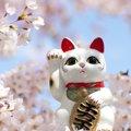 幸運を呼び込むといわれる「福猫」のひみつ