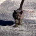 路上でうずくまった子猫…保護され大変身した姿に涙