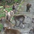 たくさんのお猿さんに囲まれた猫ちゃん…どうする?!