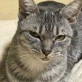 猫が呼びかけを無視する理由4つ
