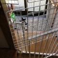 猫の脱走防止柵を自作でDIY!100円ショップにあるものとベビーガード…