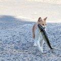 ドラ猫の「ドラ」の語源とは?野良猫との違いまで