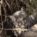 野生化した島猫たちを殺処分からレスキュー!元はと言えば、原因は人…