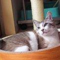 人生を変える勇気をくれた、おてんば猫『みぞれ』との出会い