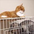 「ねぇねすこっ♡」怒られても側に居たい妹猫ちゃんが可愛すぎる♡