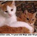高齢の2匹の猫がシェルターに持ち込まれ、1匹に里親が決まるも...