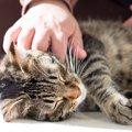 猫の『危険な吐き方』5選!日常的なことでも欠かさずにチェックして!
