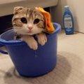 【いい湯だニャ♪】猫ちゃん、頭にタオルを載せて入浴中!
