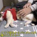 「絶対病院だにゃ」お出かけバッグに不信を抱く猫ちゃん