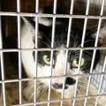 熱海土石流で残された猫たち…困難な保護活動のリアルとは?