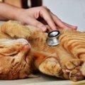 猫の病気の前兆かもしれない仕草や行動6つ