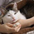 猫の9歳は人に例えると52歳!かかりやすい病気や食生活