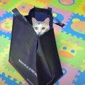 百発百中?!猫ちゃんが吸い込まれていく袋で出来た猫ホイホイ