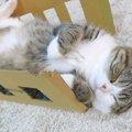 箱の無い猫生なんて考えられニャい!箱が大好きな猫さん♪