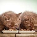 子猫のご飯の選び方。成長に合わせた量と種類を解説