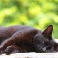 急死した猫の後継者「宝」という名の片目の黒猫