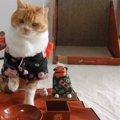 これぞ日本の猫のお正月!着物姿でおせちだニャ♪