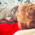 猫のマーキング方法は1つじゃない!それぞれの意味と気持ちとは?