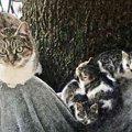 厳冬に子猫を託し消えた母猫…1年後に起こった奇跡とは?