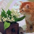 猫が死に至る『家の中のモノ』3選