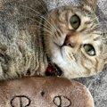 猫が『ぬいぐるみ』を溺愛し始めたときの理由5つ