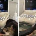 通りで保護した猫に違和感!SNSで話題をさらった猫~百万人以上が注目!