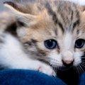 災害が起きた時は猫はどうすればいい?ペット同伴避難について考える