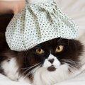 猫のウイルス性感染症について