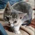 「この子猫は可愛くないから処分されるよ」と言われて引き取った命