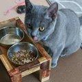 猫が満足できるご飯の与え方5つ