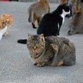 有名な猫島3つのご紹介と、行く際の注意点