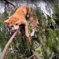 町中に響き渡るほど大声で鳴く猫は、かろうじて枝にしがみついていた