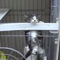 小さくたって猫だもん!運動能力抜群な子猫ちゃんの大冒険!